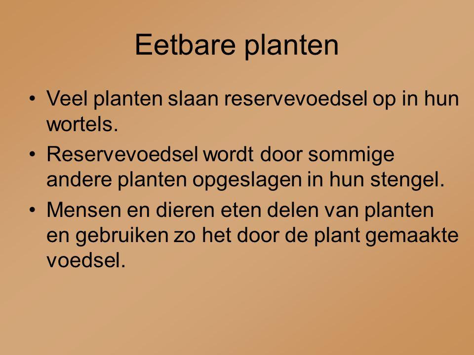 Eetbare planten Veel planten slaan reservevoedsel op in hun wortels. Reservevoedsel wordt door sommige andere planten opgeslagen in hun stengel. Mense