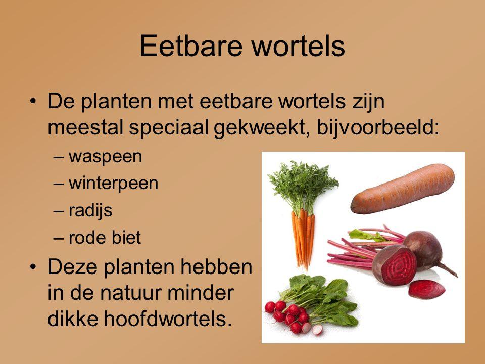 Eetbare wortels De planten met eetbare wortels zijn meestal speciaal gekweekt, bijvoorbeeld: –waspeen –winterpeen –radijs –rode biet Deze planten hebb