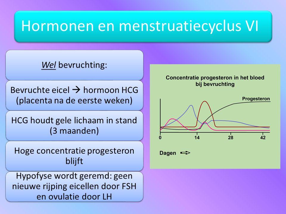 Hormonen en menstruatiecyclus VI Wel bevruchting: Bevruchte eicel  hormoon HCG (placenta na de eerste weken) HCG houdt gele lichaam in stand (3 maand