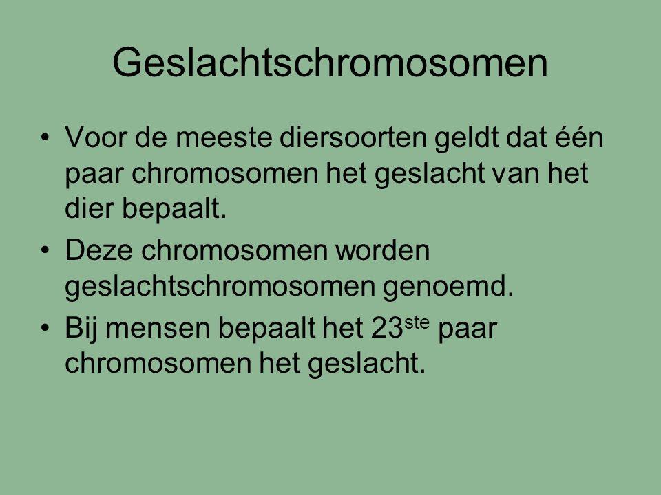 Geslachtschromosomen Voor de meeste diersoorten geldt dat één paar chromosomen het geslacht van het dier bepaalt. Deze chromosomen worden geslachtschr