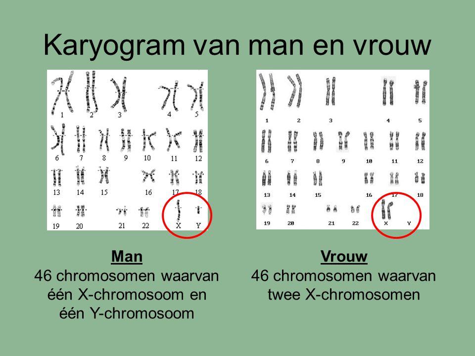 Karyogram van man en vrouw Man 46 chromosomen waarvan één X-chromosoom en één Y-chromosoom Vrouw 46 chromosomen waarvan twee X-chromosomen