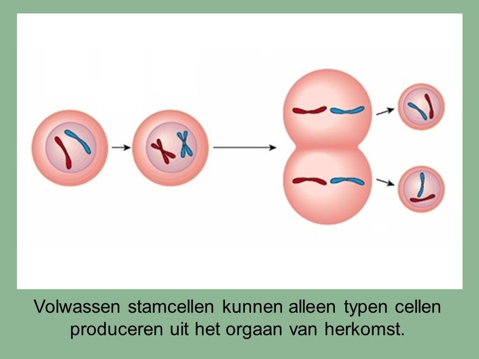 Vorming van geslachtscellen De vorming van geslachtscellen gebeurt via een speciaal type celdeling.