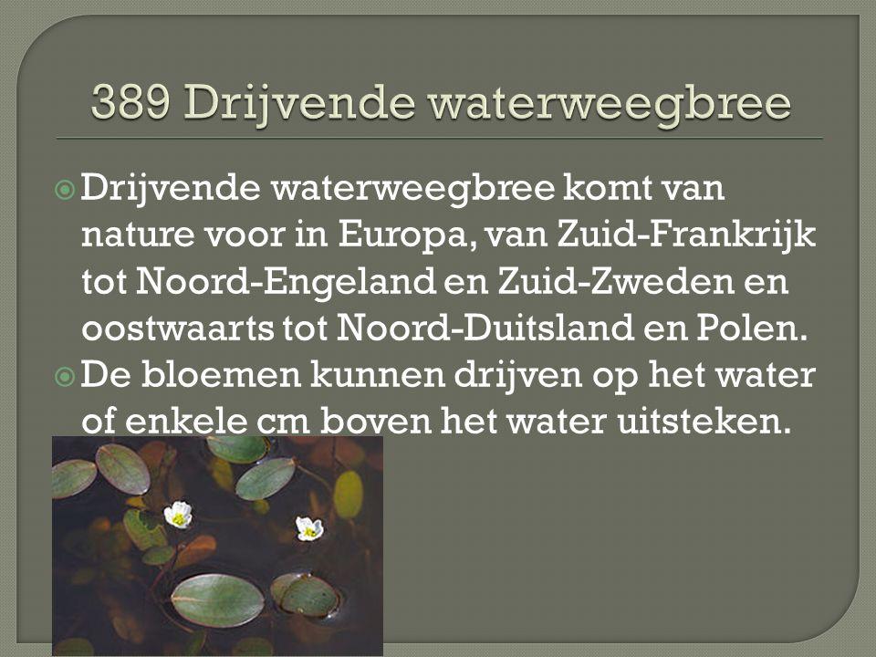  Drijvende waterweegbree komt van nature voor in Europa, van Zuid-Frankrijk tot Noord-Engeland en Zuid-Zweden en oostwaarts tot Noord-Duitsland en Po