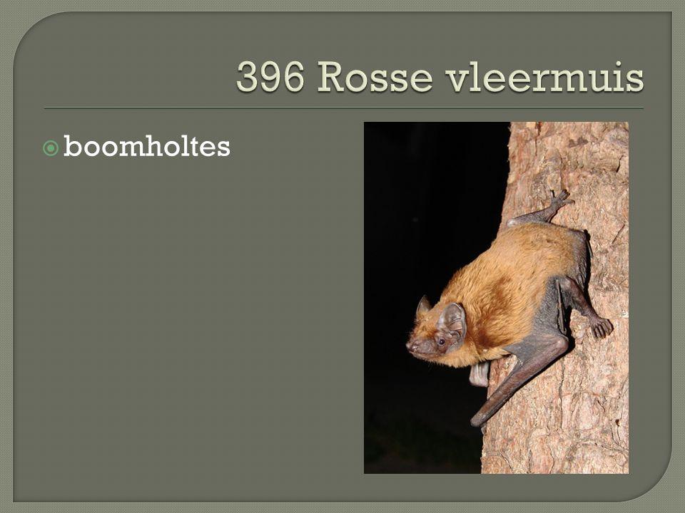  boomholtes