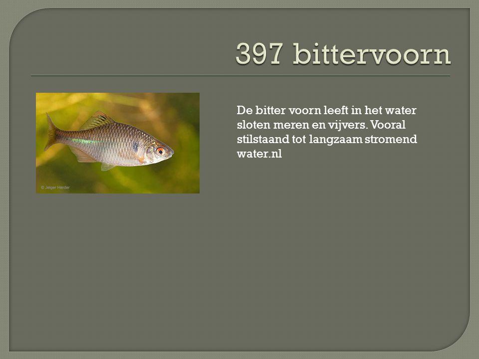 De bitter voorn leeft in het water sloten meren en vijvers. Vooral stilstaand tot langzaam stromend water.nl