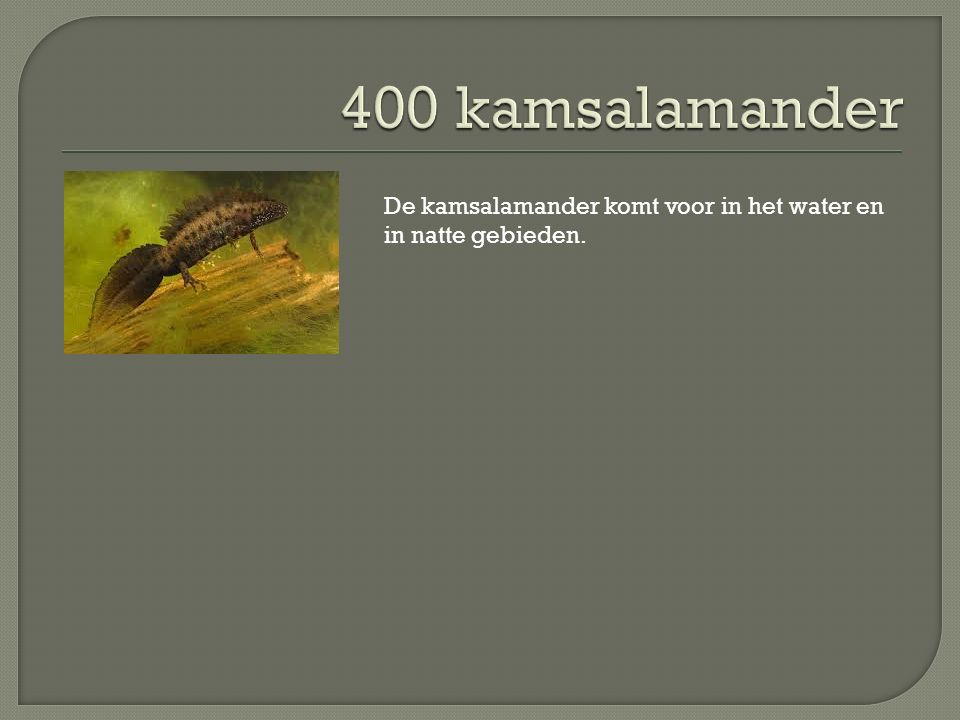 De kamsalamander komt voor in het water en in natte gebieden.