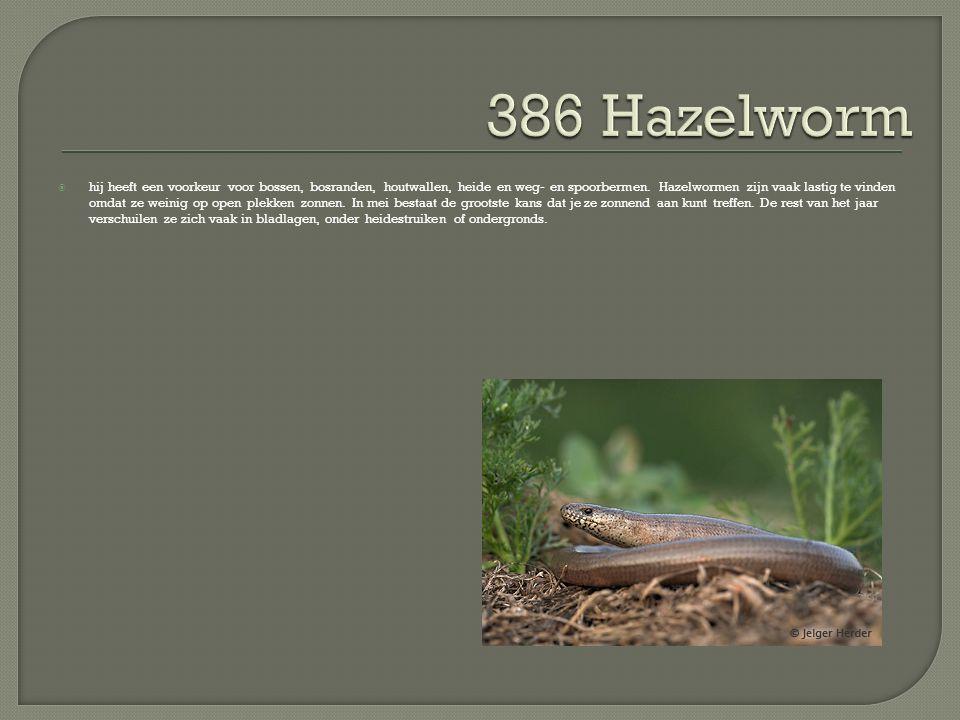  hij heeft een voorkeur voor bossen, bosranden, houtwallen, heide en weg- en spoorbermen. Hazelwormen zijn vaak lastig te vinden omdat ze weinig op o
