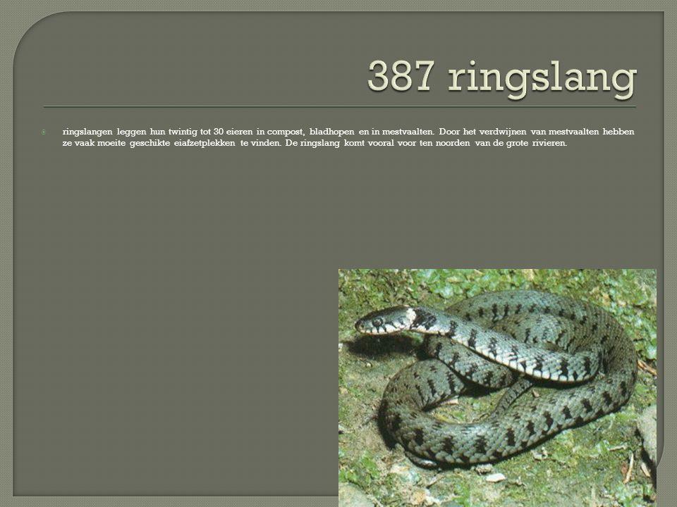  ringslangen leggen hun twintig tot 30 eieren in compost, bladhopen en in mestvaalten. Door het verdwijnen van mestvaalten hebben ze vaak moeite gesc