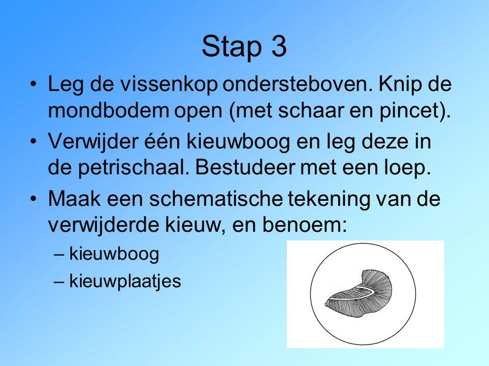 Stap 3 Leg de vissenkop ondersteboven. Knip de mondbodem open (met schaar en pincet). Verwijder één kieuwboog en leg deze in de petrischaal. Bestudeer