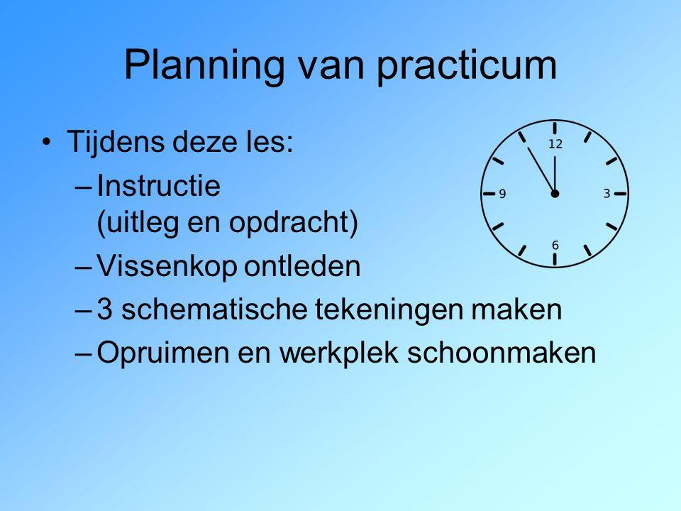 Planning van practicum Tijdens deze les: –Instructie (uitleg en opdracht) –Vissenkop ontleden –3 schematische tekeningen maken –Opruimen en werkplek s