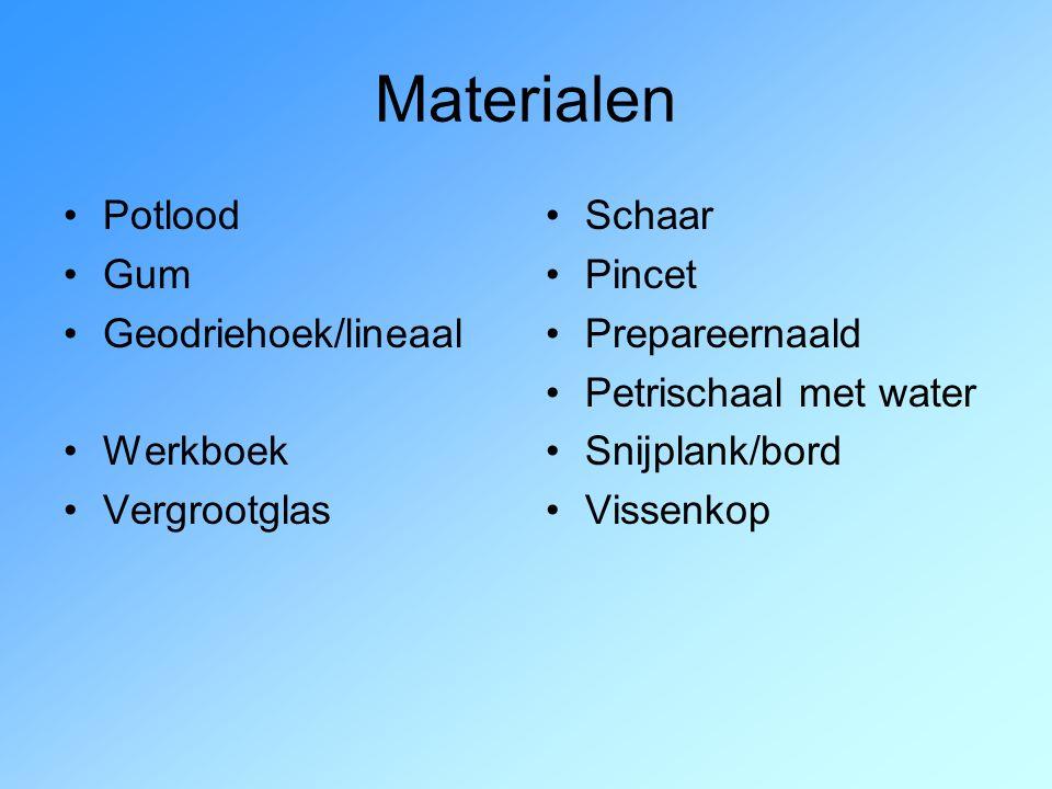 Materialen Potlood Gum Geodriehoek/lineaal Werkboek Vergrootglas Schaar Pincet Prepareernaald Petrischaal met water Snijplank/bord Vissenkop