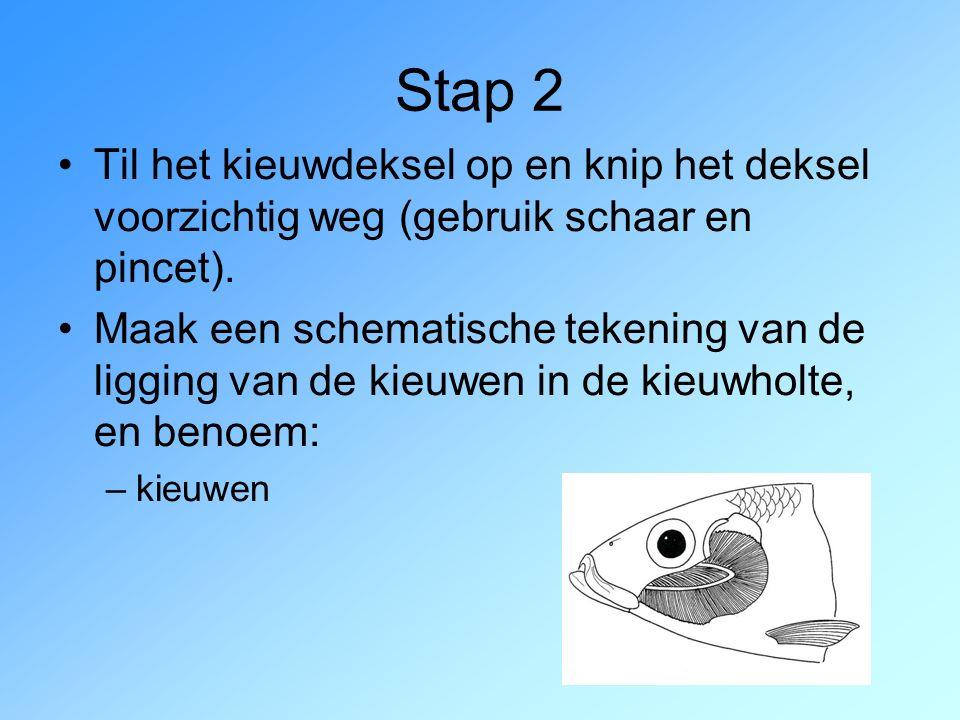 Stap 2 Til het kieuwdeksel op en knip het deksel voorzichtig weg (gebruik schaar en pincet). Maak een schematische tekening van de ligging van de kieu