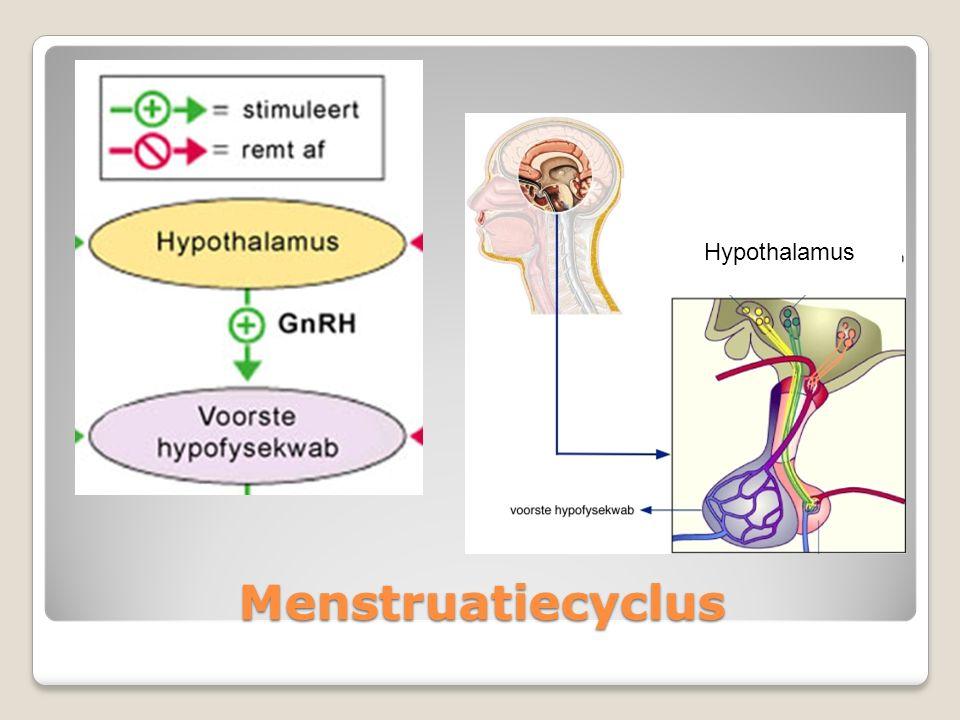 Menstruatiecyclus LH = Luteïniserend Hormoon FSH = Follikel Stimulerend Hormoon