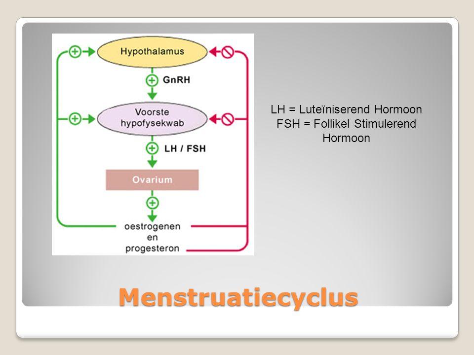Menstruatiecyclus