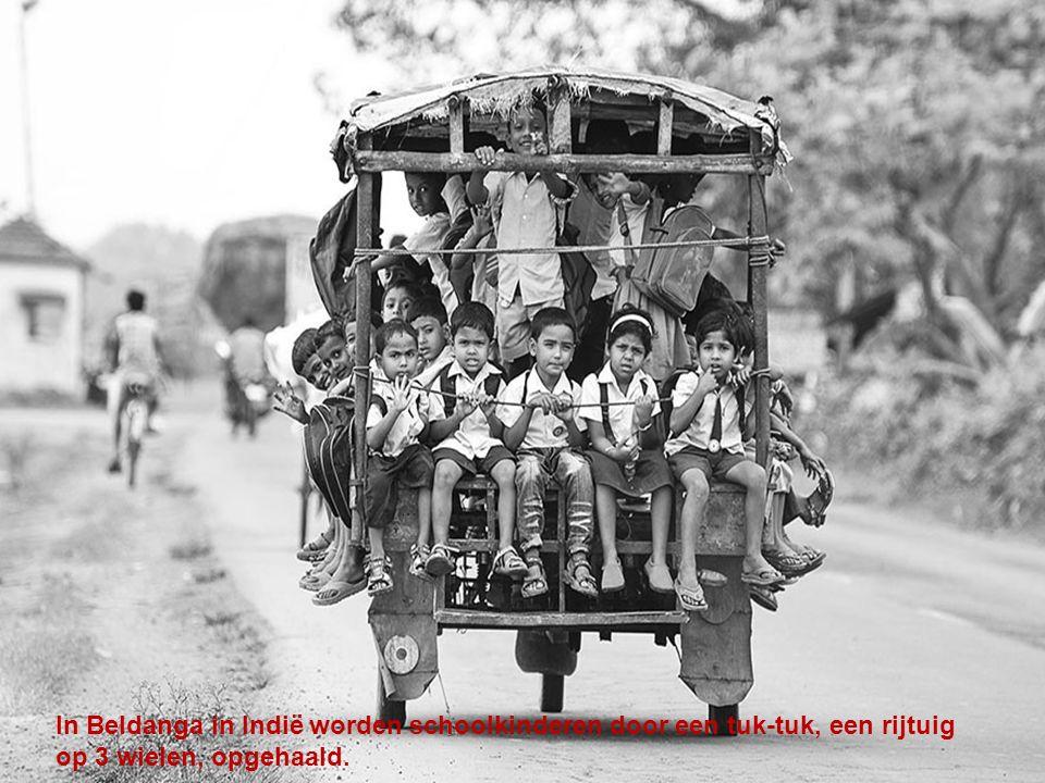 In Beldanga in Indië worden schoolkinderen door een tuk-tuk, een rijtuig op 3 wielen, opgehaald.