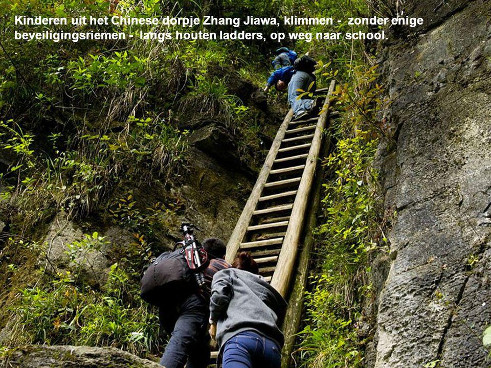 Kinderen uit het Chinese dorpje Zhang Jiawa, klimmen - zonder enige beveiligingsriemen - langs houten ladders, op weg naar school..