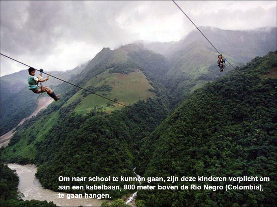 Om naar school te kunnen gaan, zijn deze kinderen verplicht om aan een kabelbaan, 800 meter boven de Rio Negro (Colombia), te gaan hangen.