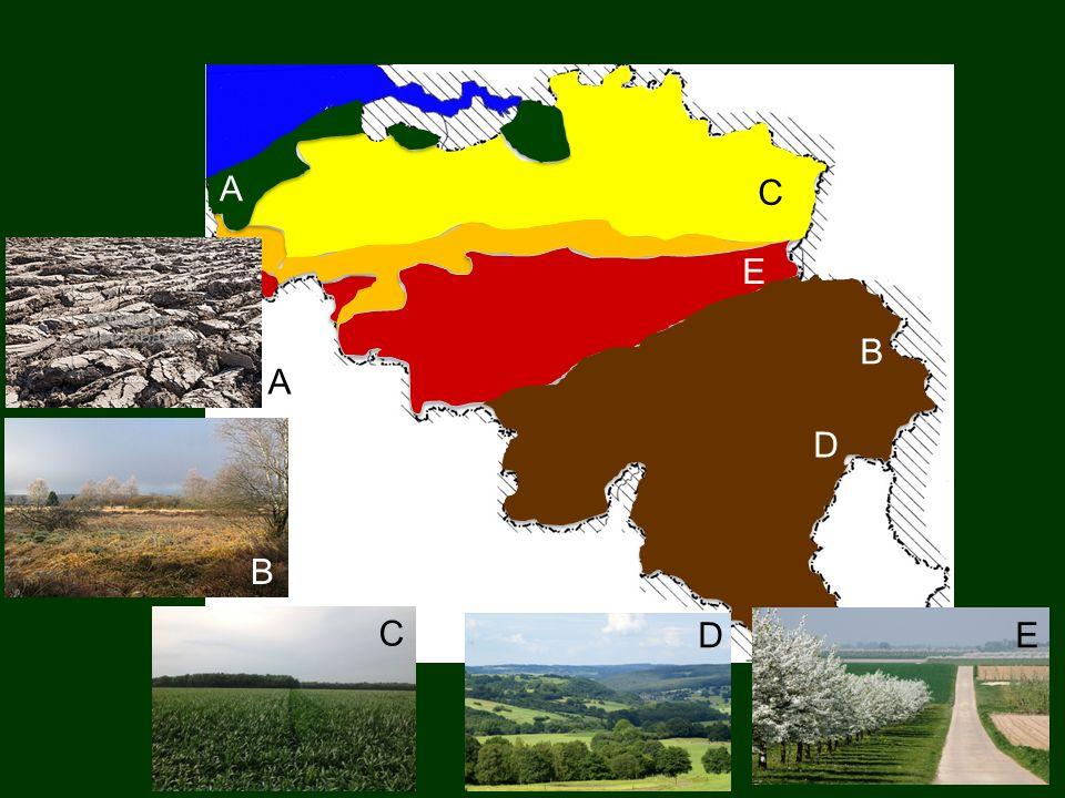 Welk oppervlaktegesteente tref je aan in Laag-België? Klei, zand