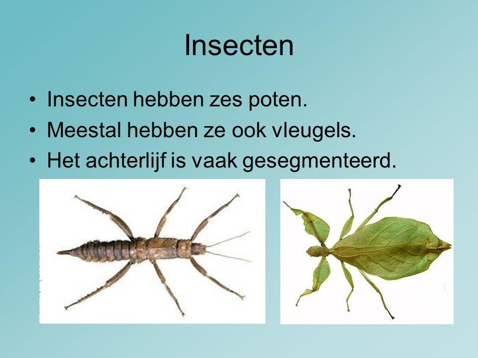 Insecten Insecten hebben zes poten. Meestal hebben ze ook vleugels. Het achterlijf is vaak gesegmenteerd.