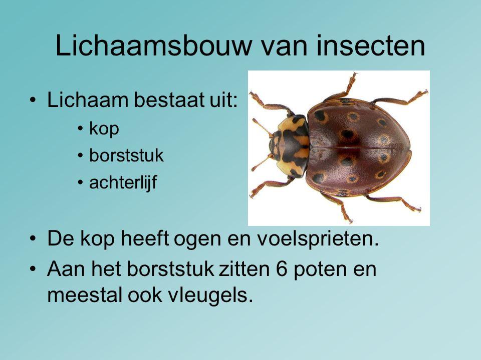 Lichaamsbouw van insecten Lichaam bestaat uit: kop borststuk achterlijf De kop heeft ogen en voelsprieten. Aan het borststuk zitten 6 poten en meestal