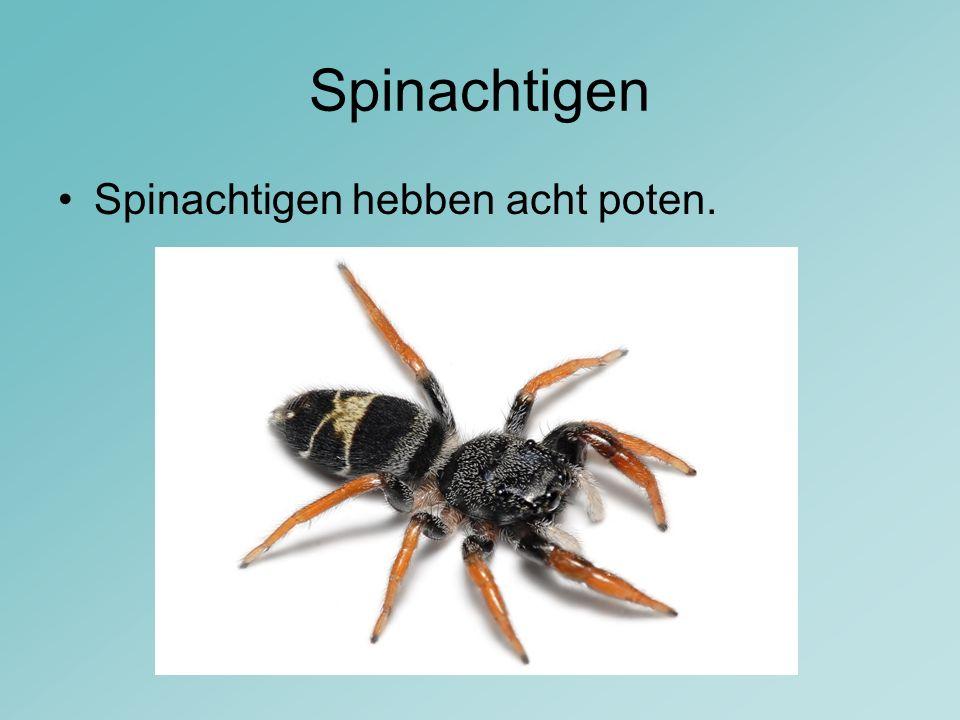 Spinachtigen Spinachtigen hebben acht poten.