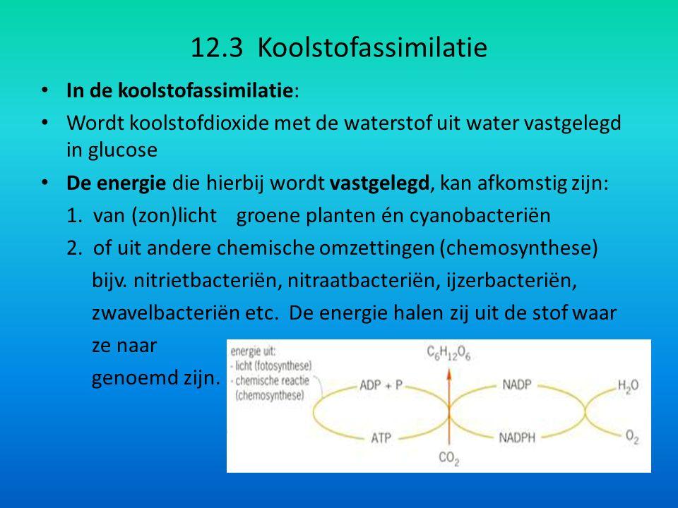 12.3 Koolstofassimilatie In de koolstofassimilatie: Wordt koolstofdioxide met de waterstof uit water vastgelegd in glucose De energie die hierbij wordt vastgelegd, kan afkomstig zijn: 1.