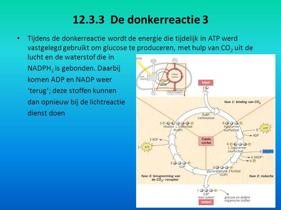 12.3.3 De donkerreactie 3 Tijdens de donkerreactie wordt de energie die tijdelijk in ATP werd vastgelegd gebruikt om glucose te produceren, met hulp van CO 2 uit de lucht en de waterstof die in NADPH 2 is gebonden.