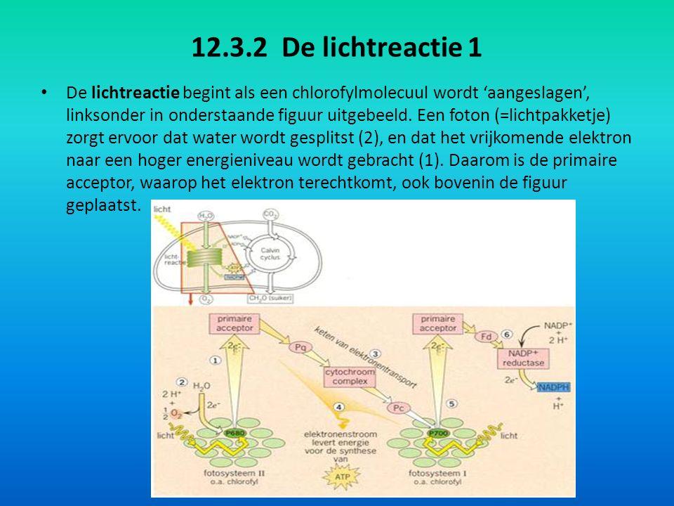 12.3.2 De lichtreactie 1 De lichtreactie begint als een chlorofylmolecuul wordt 'aangeslagen', linksonder in onderstaande figuur uitgebeeld.