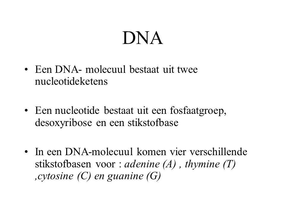 DNA Een DNA- molecuul bestaat uit twee nucleotideketens Een nucleotide bestaat uit een fosfaatgroep, desoxyribose en een stikstofbase In een DNA-molecuul komen vier verschillende stikstofbasen voor : adenine (A), thymine (T),cytosine (C) en guanine (G)