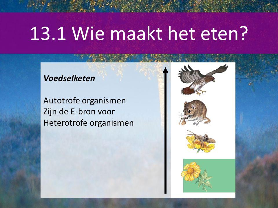 13.1 Wie maakt het eten? Voedselketen Autotrofe organismen Zijn de E-bron voor Heterotrofe organismen