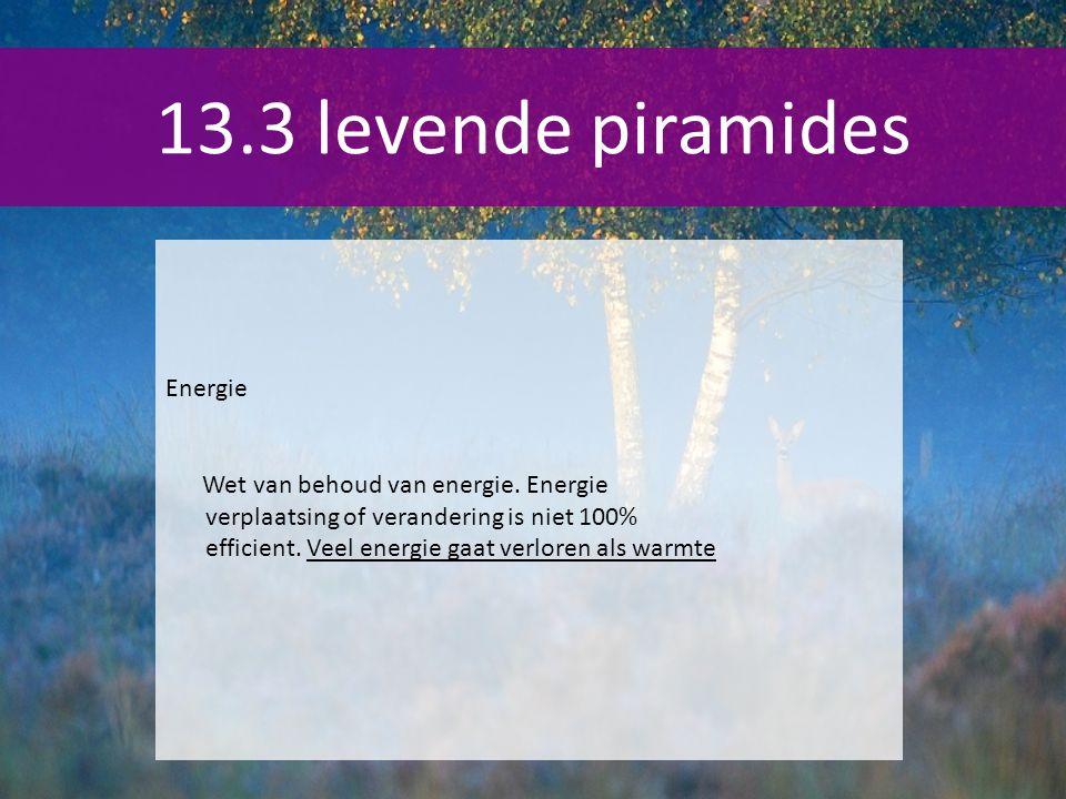 13.3 levende piramides Energie Wet van behoud van energie. Energie verplaatsing of verandering is niet 100% efficient. Veel energie gaat verloren als
