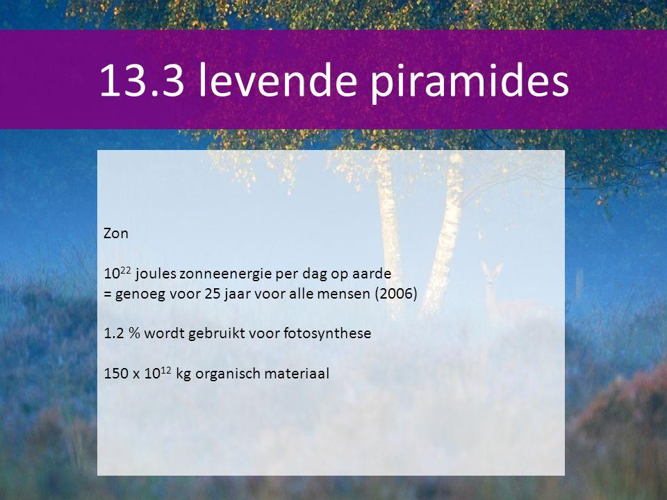 13.3 levende piramides Zon 10 22 joules zonneenergie per dag op aarde = genoeg voor 25 jaar voor alle mensen (2006) 1.2 % wordt gebruikt voor fotosynthese 150 x 10 12 kg organisch materiaal