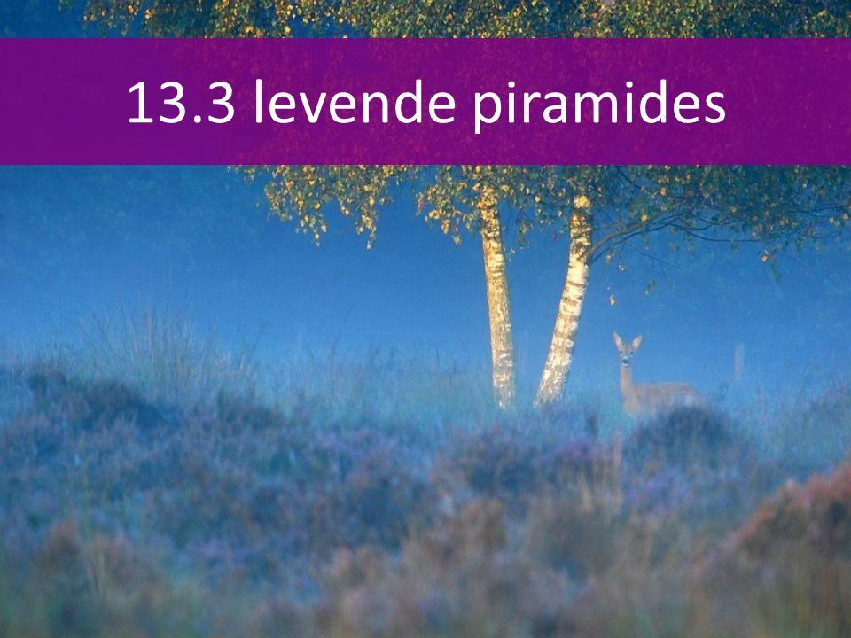 13.3 levende piramides