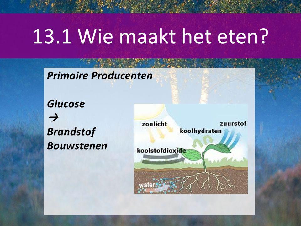 13.1 Wie maakt het eten? Primaire Producenten Glucose  Brandstof Bouwstenen