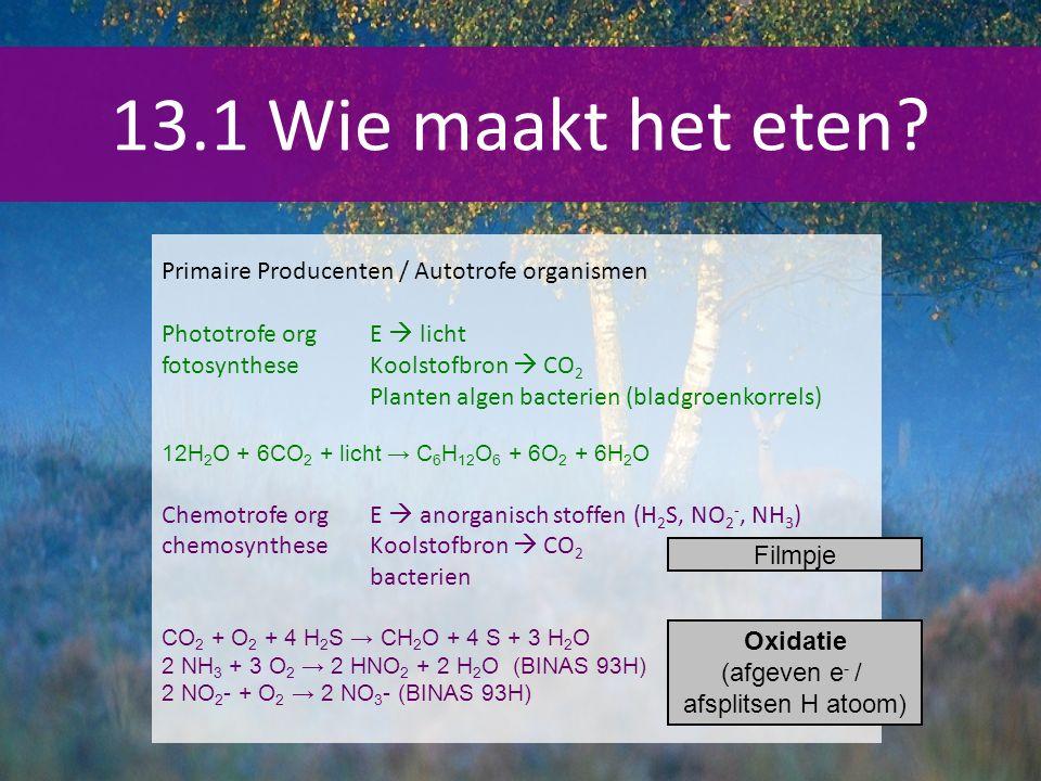 13.1 Wie maakt het eten? Primaire Producenten / Autotrofe organismen Phototrofe orgE  licht fotosyntheseKoolstofbron  CO 2 Planten algen bacterien (