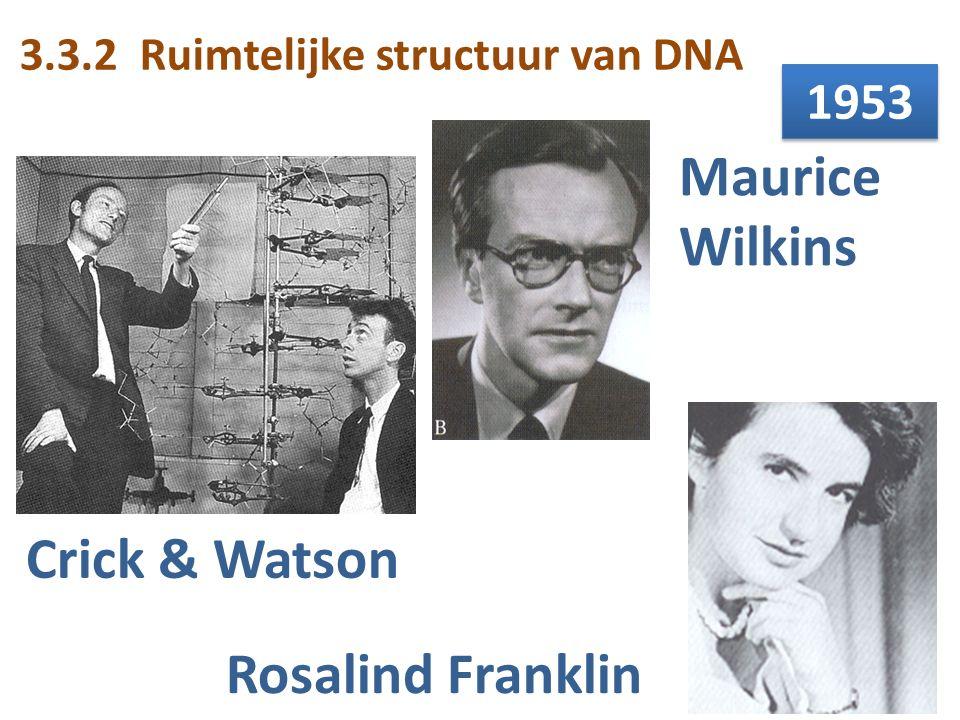 Crick & Watson Maurice Wilkins Rosalind Franklin 1953 3.3.2 Ruimtelijke structuur van DNA