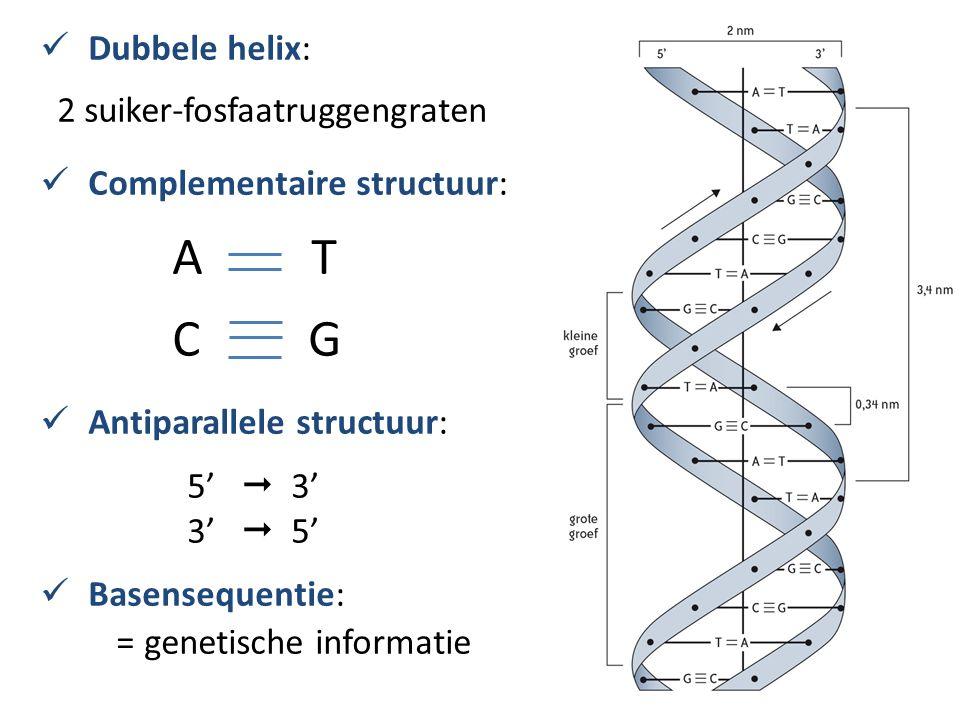 Dubbele helix: 2 suiker-fosfaatruggengraten Complementaire structuur: A T C G Antiparallele structuur: 5'  3' 3'  5' Basensequentie: = genetische informatie