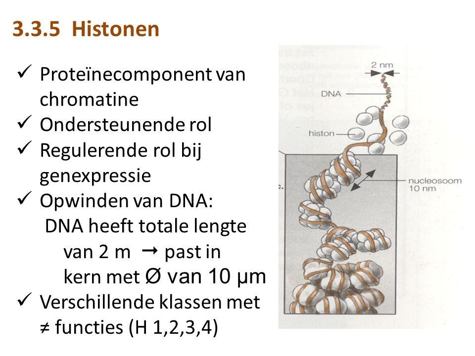 3.3.5 Histonen Proteïnecomponent van chromatine Ondersteunende rol Regulerende rol bij genexpressie Opwinden van DNA: DNA heeft totale lengte van 2 m  past in kern met Ø van 10 µm Verschillende klassen met ≠ functies (H 1,2,3,4)