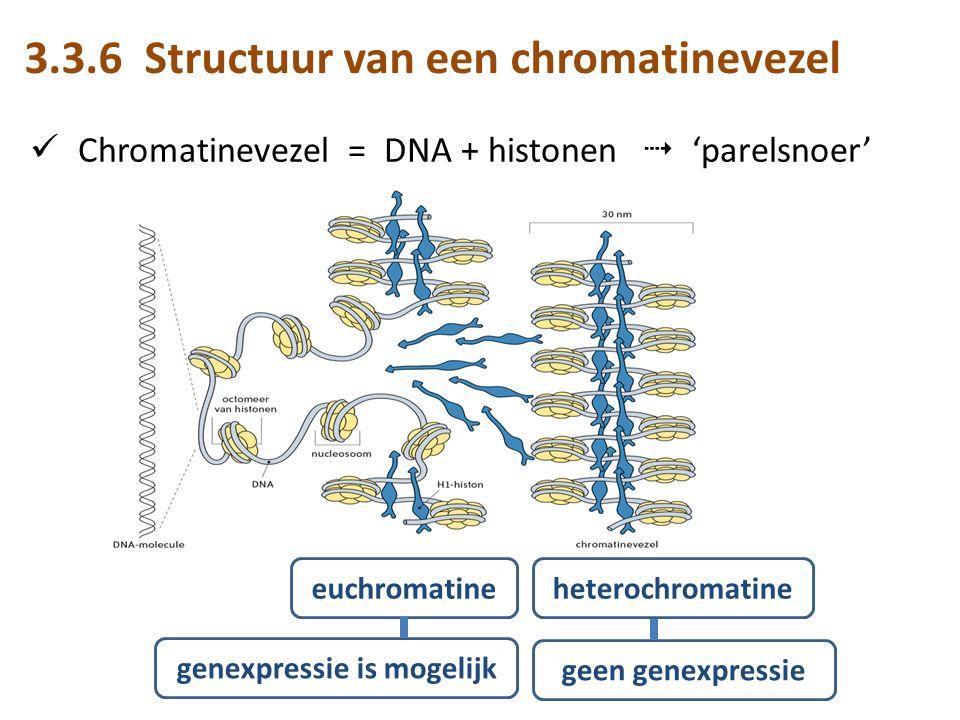 Chromatinevezel = DNA + histonen  'parelsnoer' euchromatineheterochromatine genexpressie is mogelijk geen genexpressie 3.3.6 Structuur van een chromatinevezel