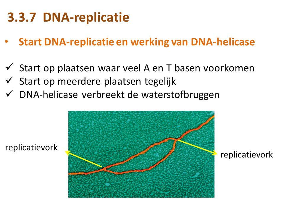 Start DNA-replicatie en werking van DNA-helicase Start op plaatsen waar veel A en T basen voorkomen Start op meerdere plaatsen tegelijk DNA-helicase verbreekt de waterstofbruggen replicatievork 3.3.7 DNA-replicatie