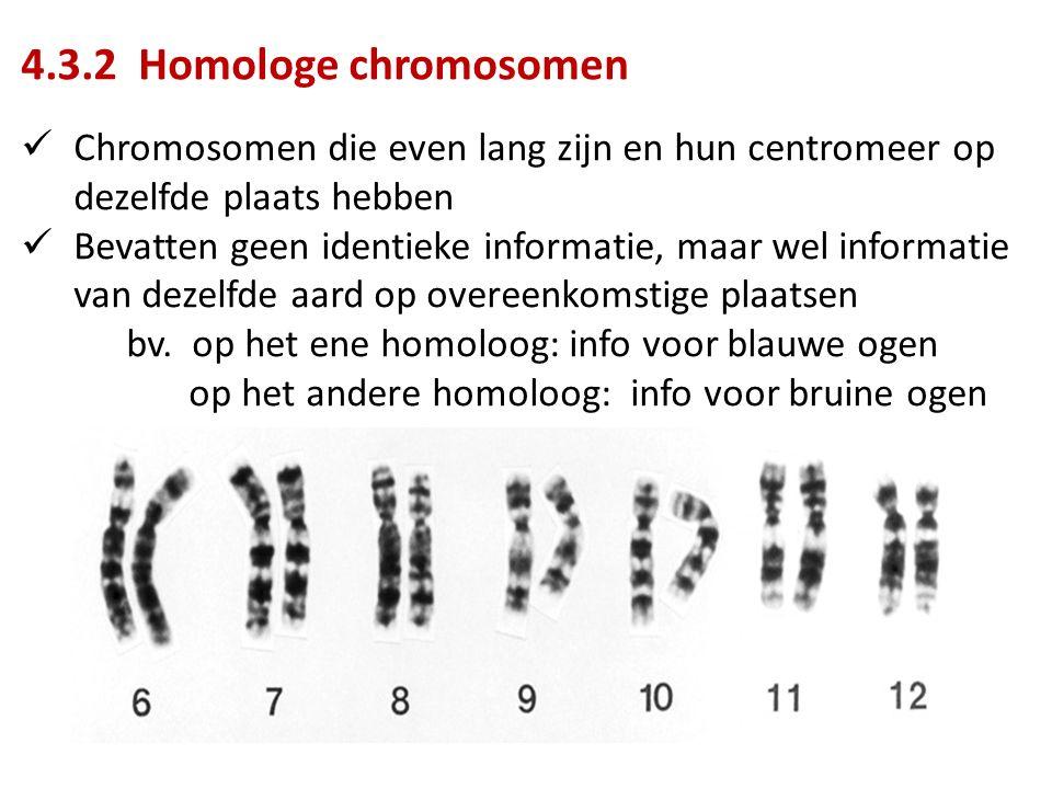 4.3.2 Homologe chromosomen Chromosomen die even lang zijn en hun centromeer op dezelfde plaats hebben Bevatten geen identieke informatie, maar wel informatie van dezelfde aard op overeenkomstige plaatsen bv.
