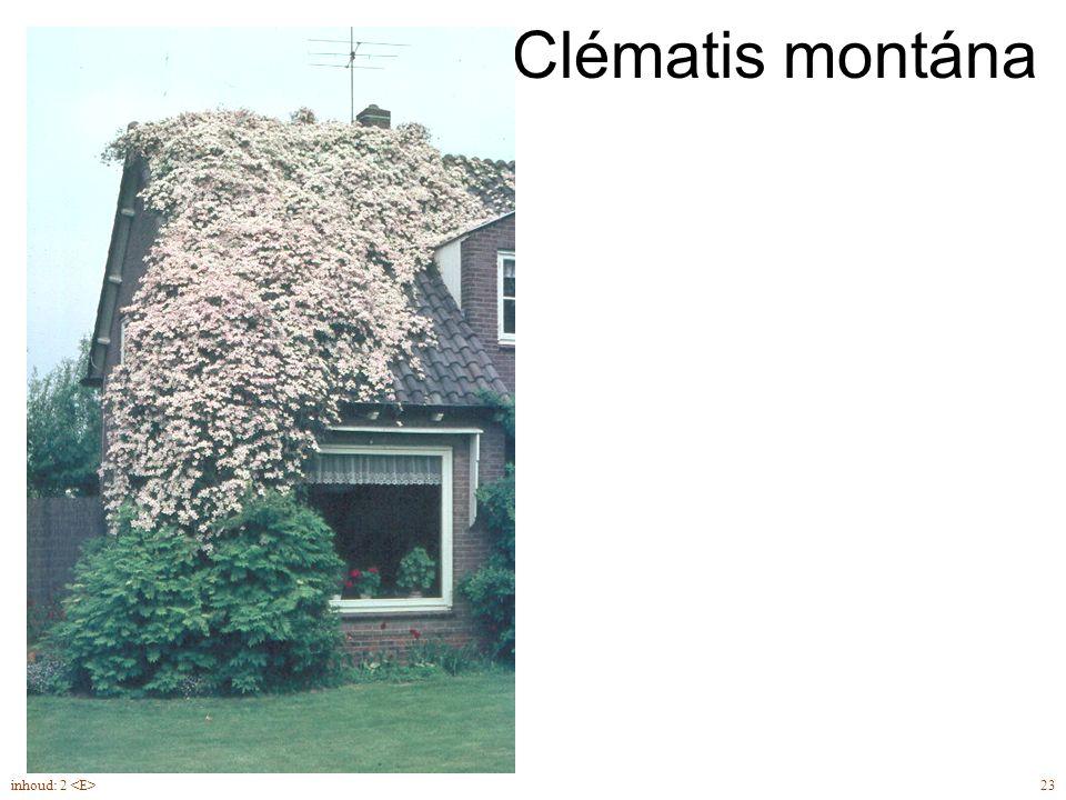 Clématis montána 23inhoud: 2 Clematis montana 'Superba'