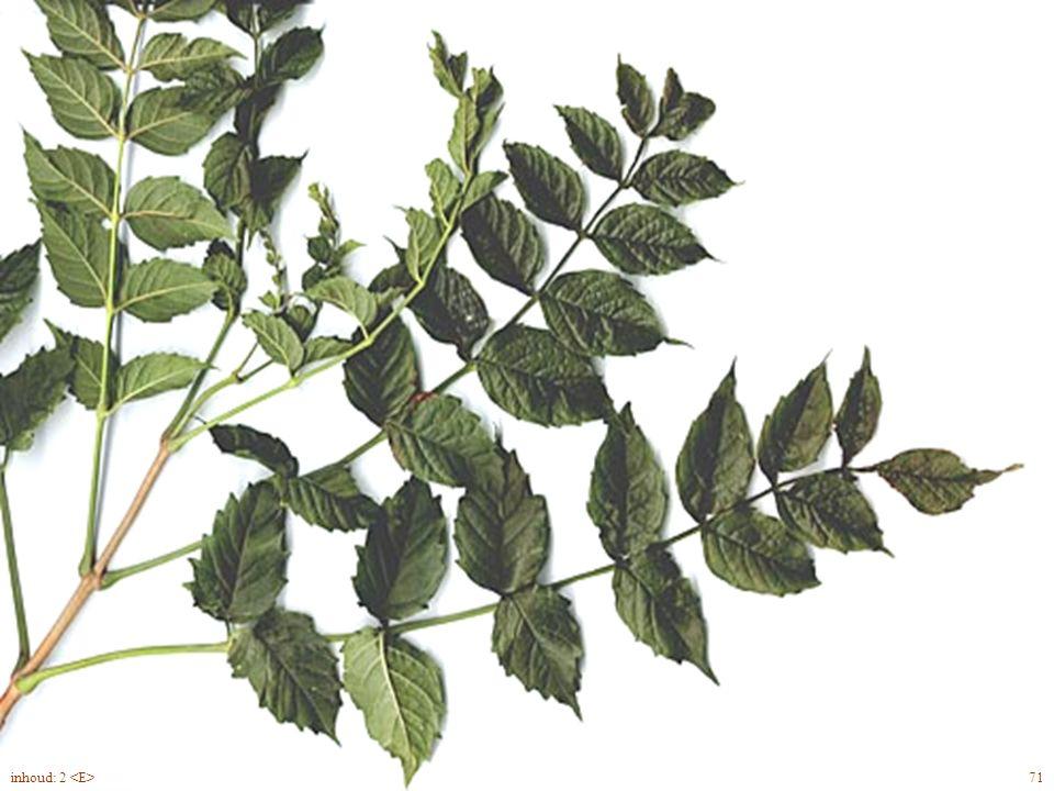 Euónymus fortúnei 'Emerald'n Gold' 95inhoud: 2 groenblijvend