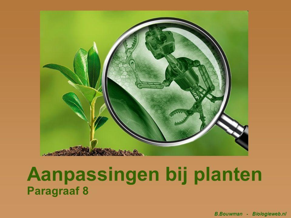 Aanpassingen bij planten Paragraaf 8 B.Bouwman - Biologieweb.nl
