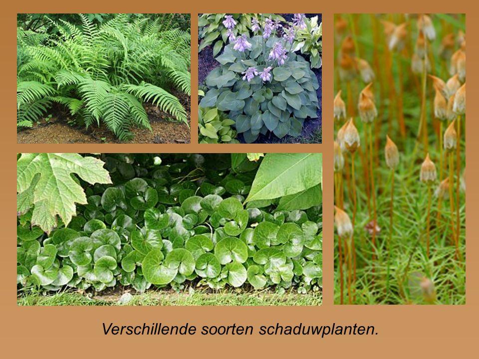 Verschillende soorten schaduwplanten.