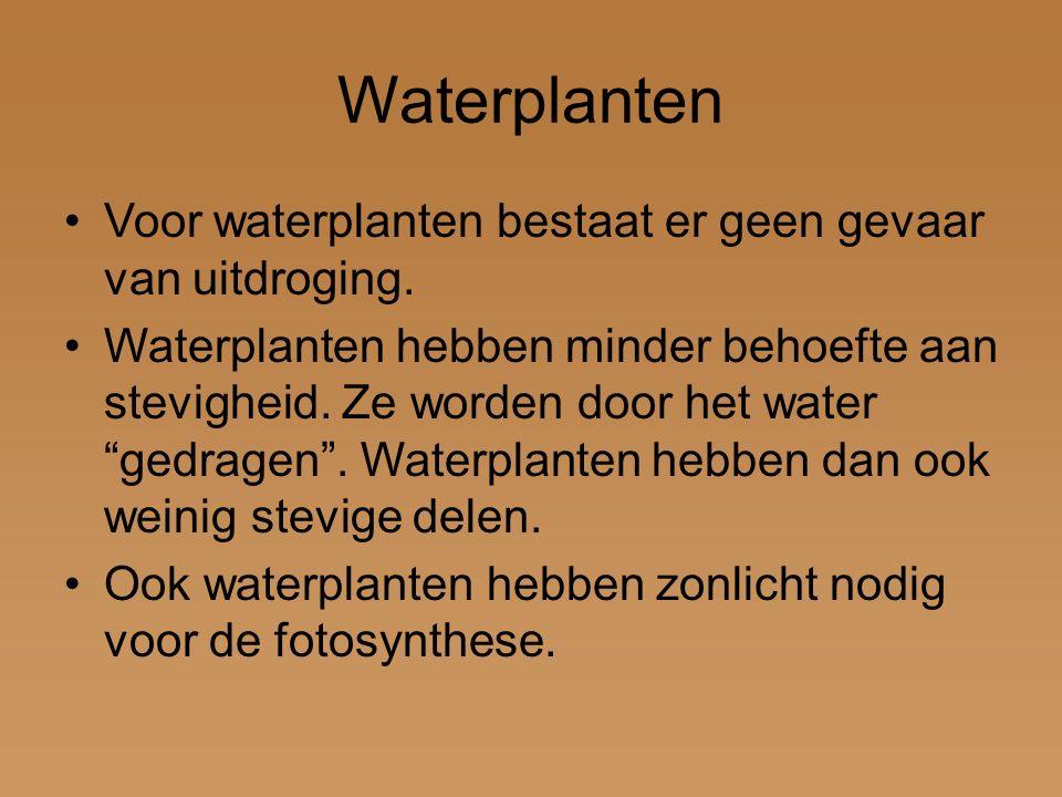 """Waterplanten Voor waterplanten bestaat er geen gevaar van uitdroging. Waterplanten hebben minder behoefte aan stevigheid. Ze worden door het water """"ge"""
