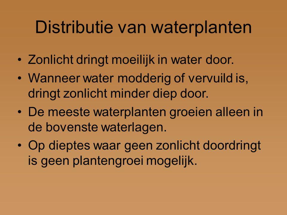 Distributie van waterplanten Zonlicht dringt moeilijk in water door. Wanneer water modderig of vervuild is, dringt zonlicht minder diep door. De meest