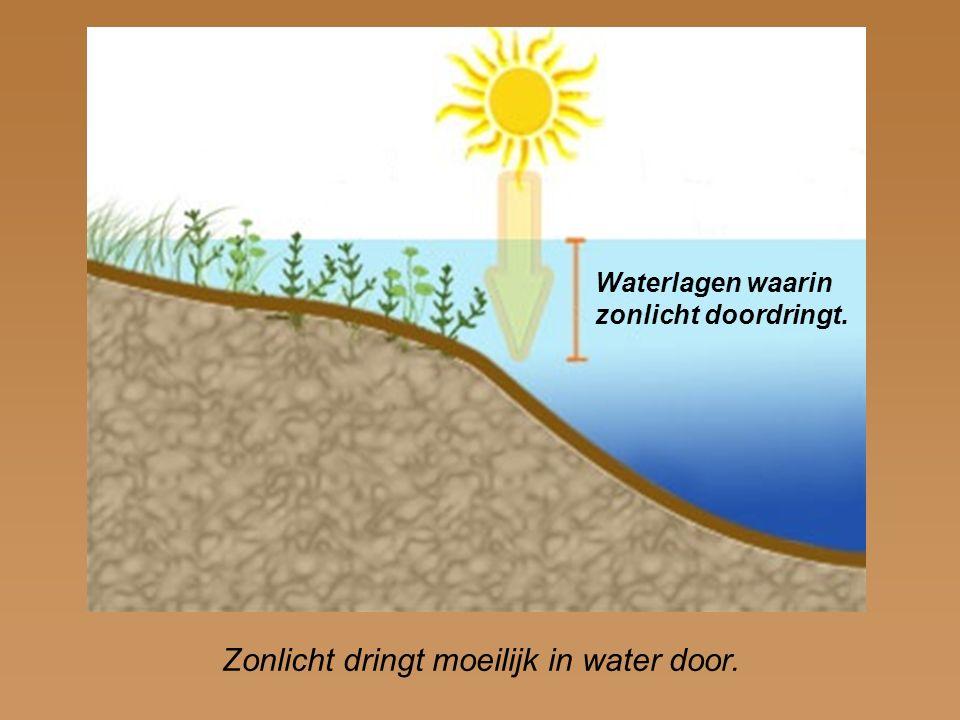 Waterlagen waarin zonlicht doordringt. Zonlicht dringt moeilijk in water door.