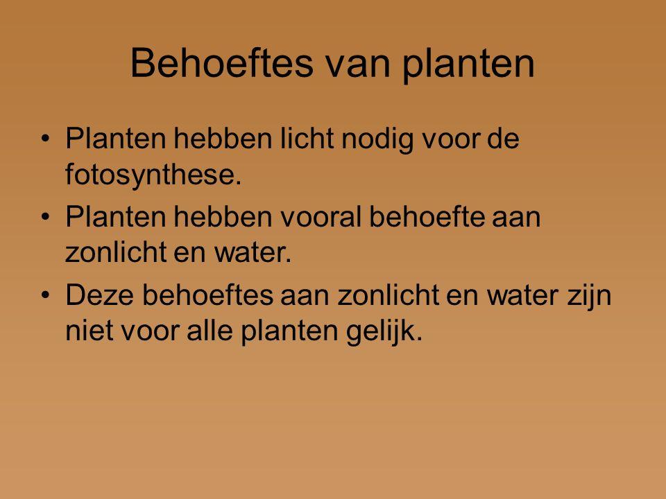 Behoeftes van planten Planten hebben licht nodig voor de fotosynthese. Planten hebben vooral behoefte aan zonlicht en water. Deze behoeftes aan zonlic