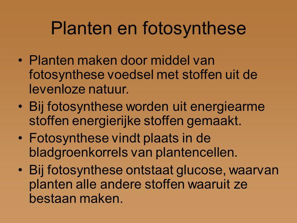 Fotosynthese H 2 0 + CO 2 + (zon)licht C 6 H 12 O 6 + O 2 H 2 0water CO 2 koolstofdioxide C 6 H 12 O 6 glucose O 2 zuurstof